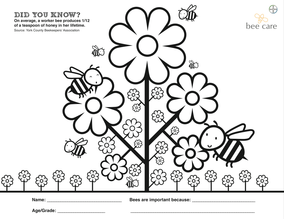 sac bee coloring contest pages - photo#6